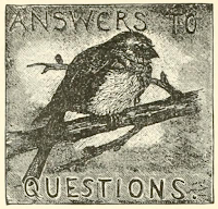 "bird image labeled ""answers to questions"""