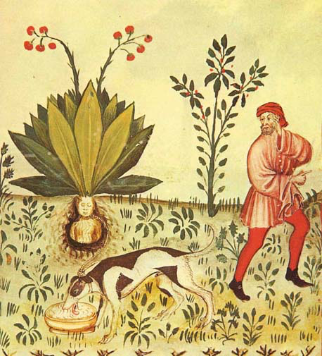 manuscript illustration of man, dog, and mandrake growing with human-like head visible under soil