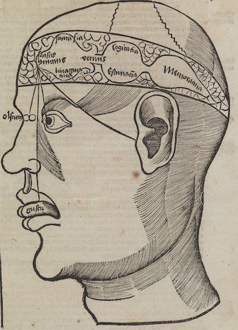 diagram of head with brain parts and sense organs labeled