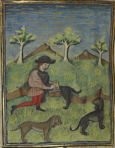 illumination of hunter grooming hunting dog with comb while other dogs loiter