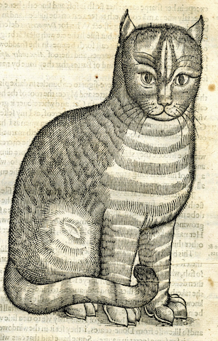 engraving of cat with dramatic eyebrows