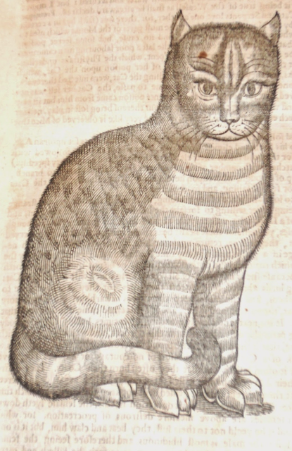 engraving of cat with prominent eyebrows