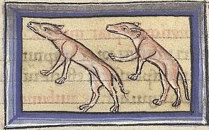 illustration of two animals, not obviously weasels