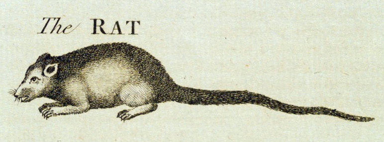 "engraving of ""The RAT"""