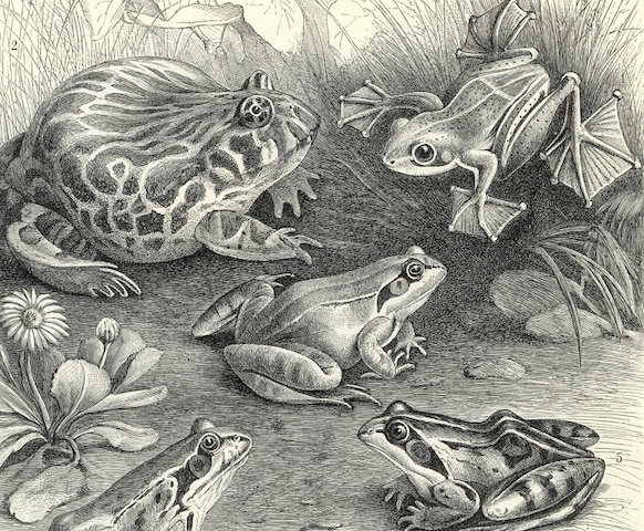 illustration of various frogs